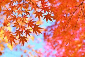 秋の紅葉の写真